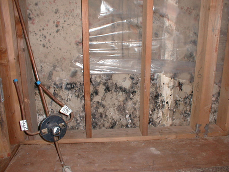 Mold Law Firm - 3rd Party Fungi Evaluation Following Major Leak